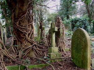 new_303-highgate_cemetery_FOTO_10_vines[1]