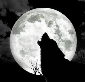 lupo-e-luna