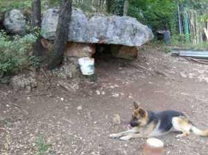 new_Presunto dolmen di Cesale - foto G Pavat ago 2010