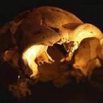 L'Uomo è più vecchio di 700.000 anni! Due studi retrodatano la comparsa dell'Uomo sulla Terra