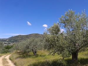 5 Le colline alatrensi
