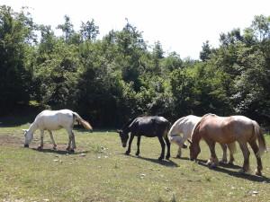 Animali al Pascolo nei pressi dell'Arco di Trevi
