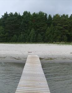 Taiga e spiaggia di Hide nel Baltico