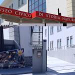 """LINK: La """"Chimera di Trieste"""" su www.luoghimisteriosi.it"""
