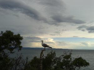 1 Golfo di Trieste visto dal castello di Miramare