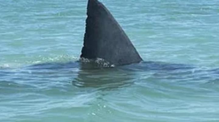 Storie di mare; il Finanziere austroungarico e il grande squalo bianco.