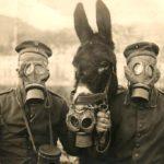 Virus e batteri: terrore di un'epidemia o delitto all'Antrace nel XVIII secolo? di Roberto Volterri