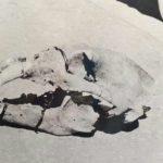La vera storia delle scoperte preistoriche di Valle Radice,  Sora (FR); di Marco Mele e Giancarlo Pavat