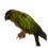 PAPPAGALLI (NELL'ARTE) CHE NON DOVREBBERO ESSERCI, di Giancarlo Pavat in collaborazione con Gioia Pavat per le foto dei pappagalli Pedro e Conny